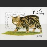 Афганистан. Кошки