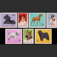 Венгрия. Собаки