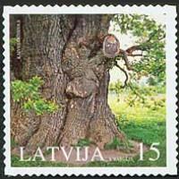 Природные памятники. Кайвский дуб