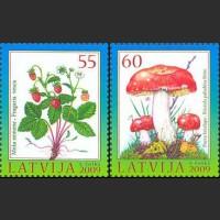 Дары лесов: ягоды и грибы