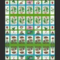 Дары леса: ягоды и грибы